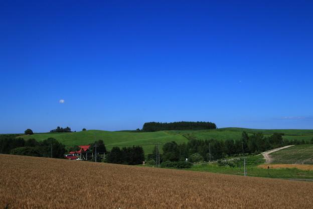 写真: マイルドセブンの丘 180728 03