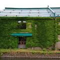 写真: 小樽運河 180801 02