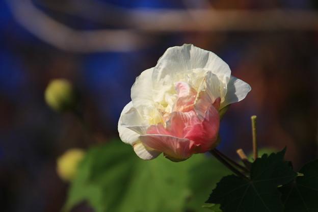 御近所で見た花 181103 02