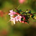 写真: 御近所で見た花 181103 03