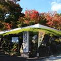 写真: 桐生 宝徳寺 181114 01