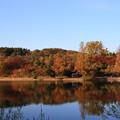 写真: 吉見町 八丁湖 181124 01