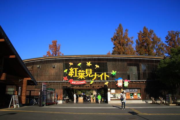 武蔵丘陵森林公園 181127 01