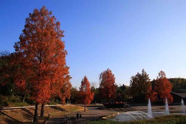 武蔵丘陵森林公園 181127 03