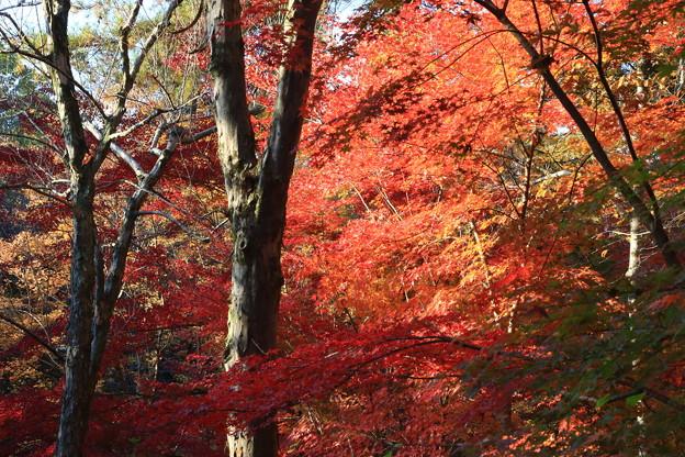 武蔵丘陵森林公園 181127 05