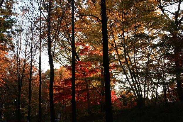 武蔵丘陵森林公園 181127 07