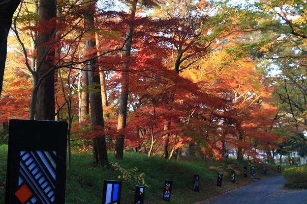 武蔵丘陵森林公園 181127 08