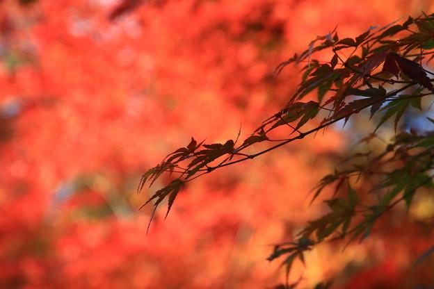 武蔵丘陵森林公園 181127 10