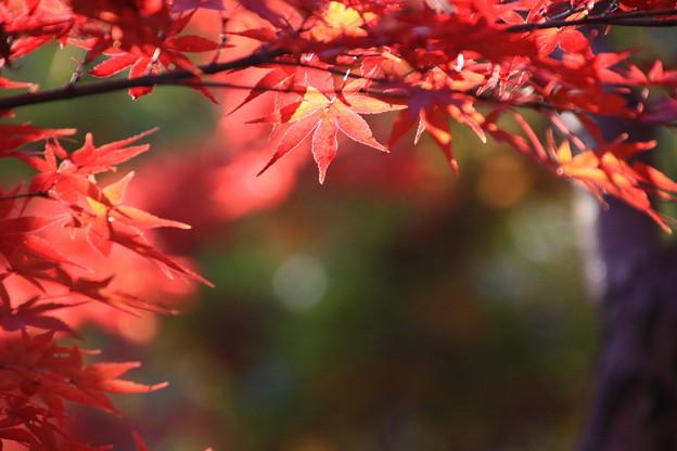 武蔵丘陵森林公園 181127 11