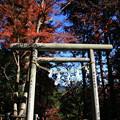 写真: 東郷公園 181130 11