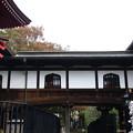 写真: 上野恩賜公園 181023 04