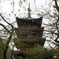 写真: 上野恩賜公園 181023 11