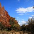 写真: 加須はなさき水上公園 181213 02
