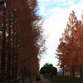 写真: 加須はなさき水上公園 181213 03