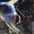 写真: 北本自然観察公園 181214 02