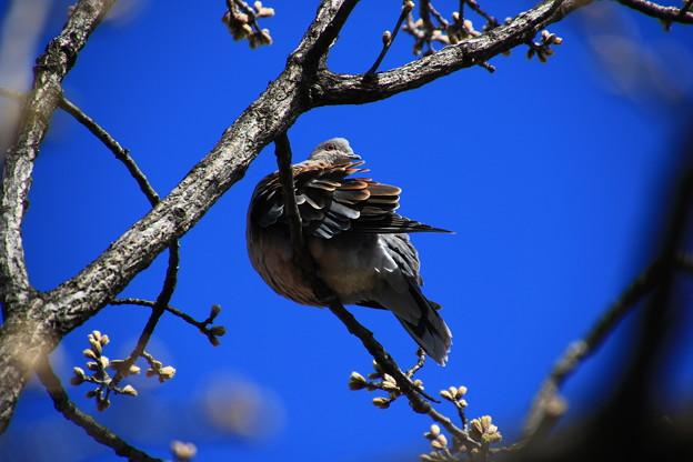 さきたま緑道の野鳥 180322 07