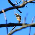 写真: 吉見観音の野鳥 181110 01