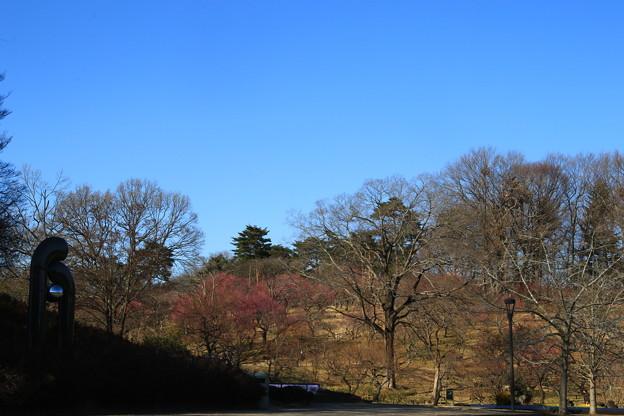 武蔵丘陵森林公園 190212 02