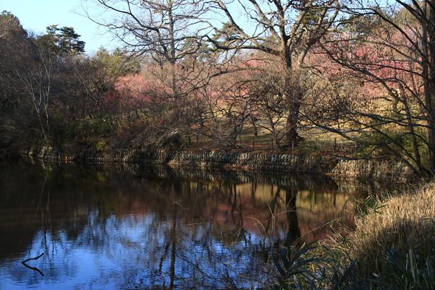 武蔵丘陵森林公園 190212 03