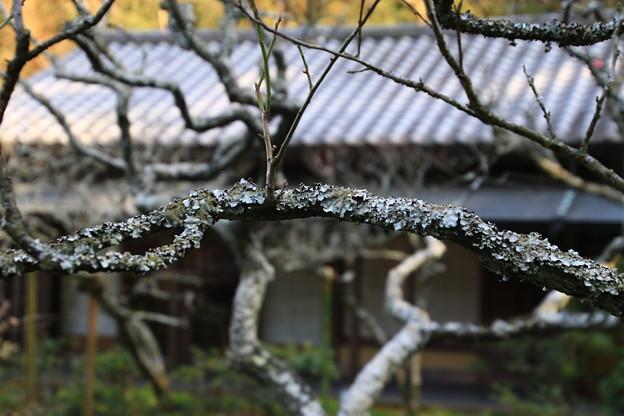 東慶寺 190220 04