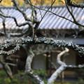 写真: 東慶寺 190220 04