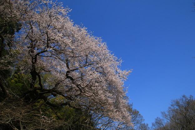 北本自然観察公園 190327 02