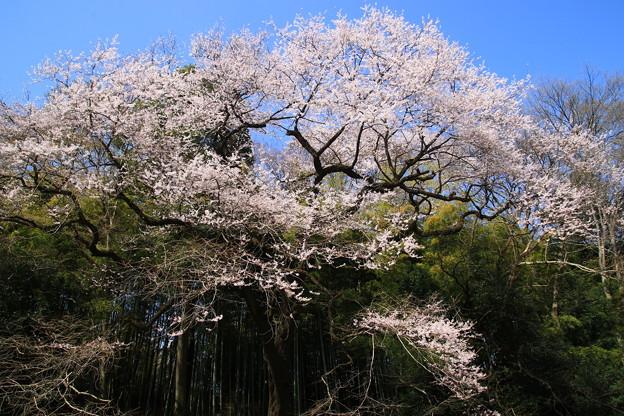 北本自然観察公園 190327 03