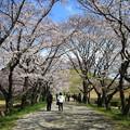 Photos: さきたま古墳公園 190405 02