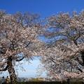 Photos: さきたま古墳公園 190405 03