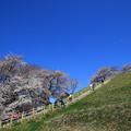 Photos: さきたま古墳公園 190405 05
