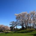 Photos: さきたま古墳公園 190409 02