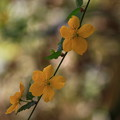 慈光寺の花 190416 02