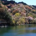 鎌北湖 190416 03