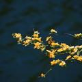 鎌北湖の花 190416 02