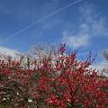 忍野八海の花 190423 01