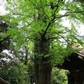 玉敷神社 190501 03