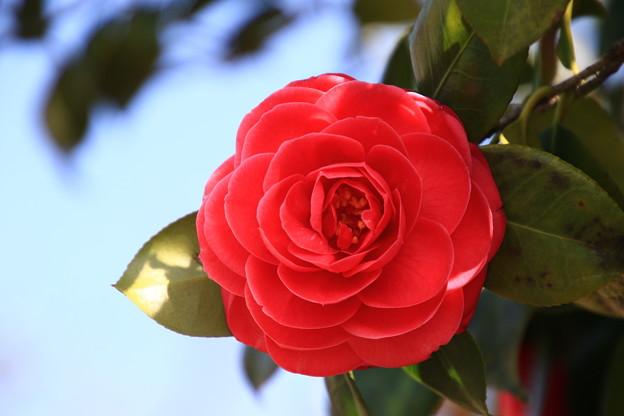 吉見百穴の花 190405 01