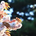 Photos: 函館で出会った花 190513 01