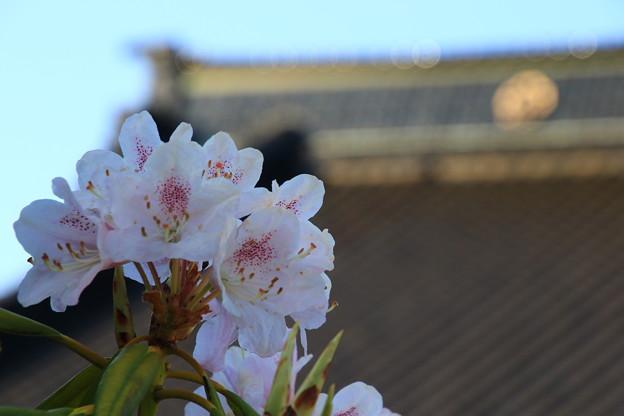 函館で出会った花 190513 02