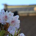 Photos: 函館で出会った花 190513 02