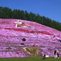 Photos: 東藻琴芝桜公園 190518 01
