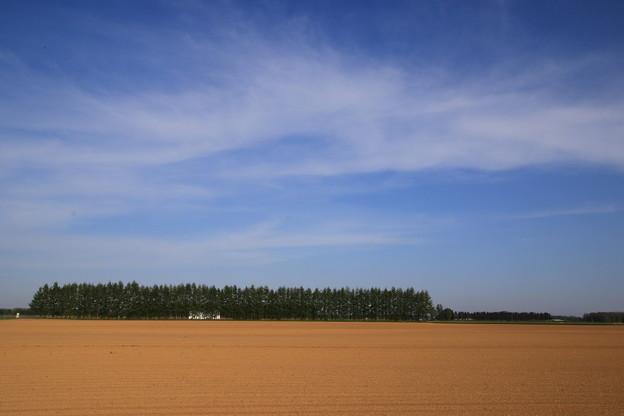 帯広の畑地 190519 03