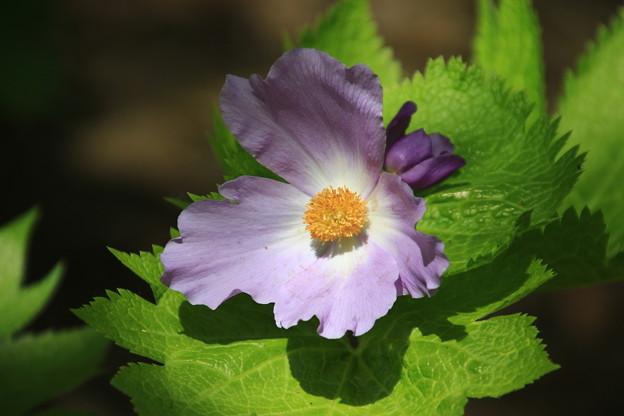 六花の森 190520 04