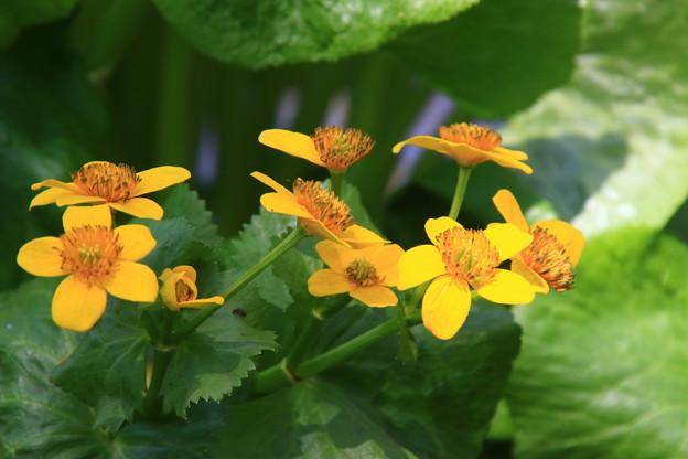 六花の森 190520 05