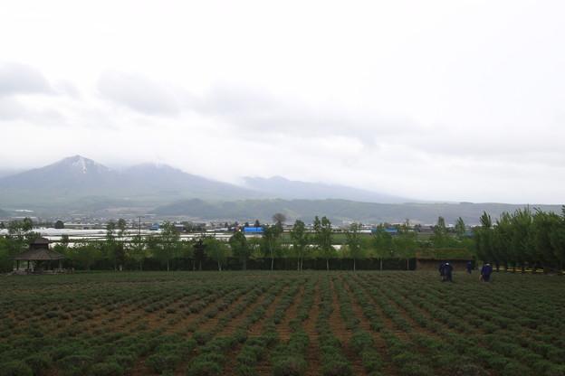 ファーム富田 190521 01
