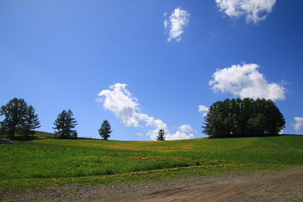 美瑛の丘 190522 09