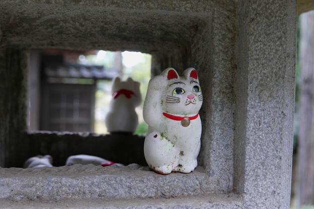 招福猫児(まねぎねこ)