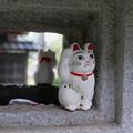 写真: 招福猫児(まねぎねこ)