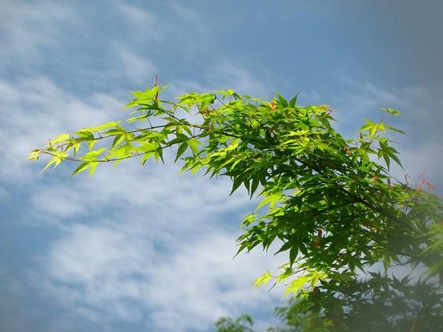 「空と雲・・紅葉の種と・・」 ・・・・