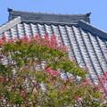 Photos: 甍と百日紅